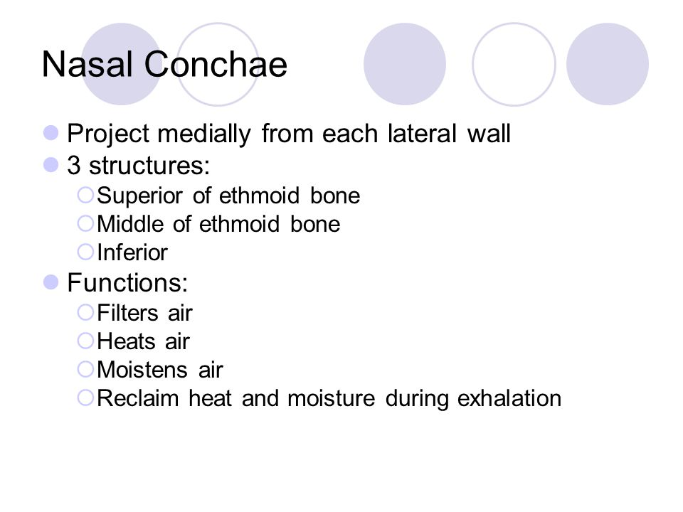 Nasal Conchae Project medially from each lateral wall 3 structures: