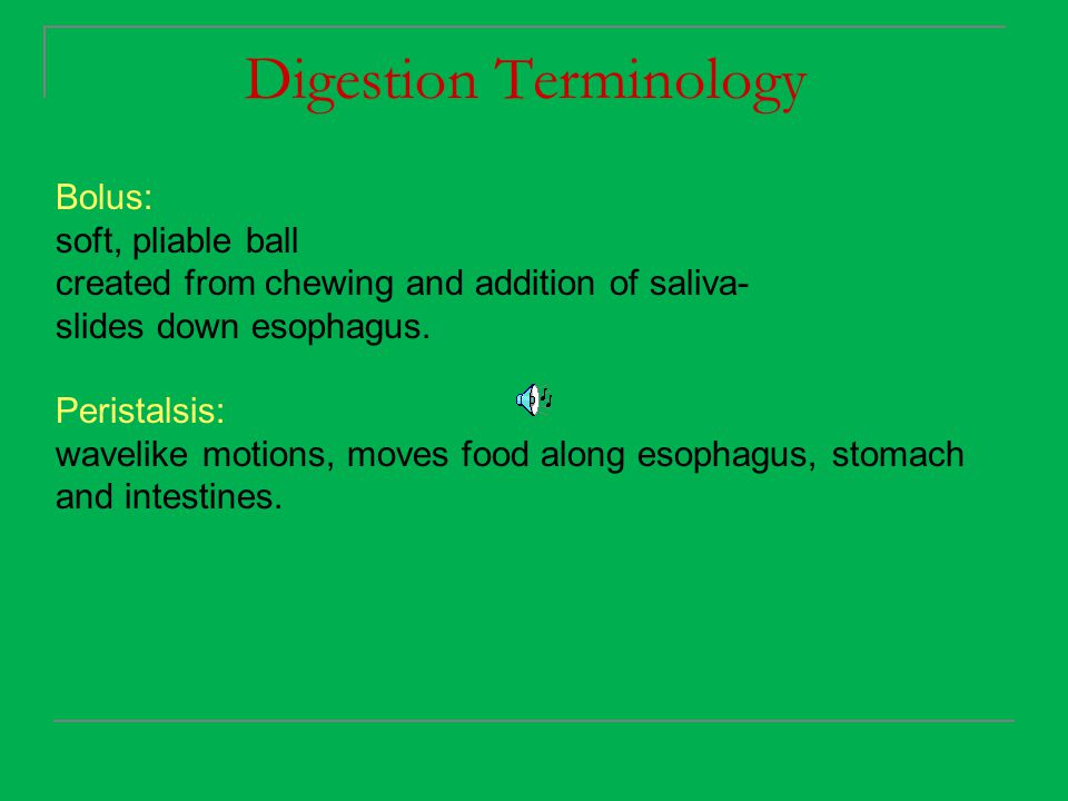 Digestion Terminology