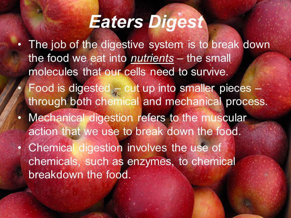 Eaters Digest The job of the digestive system is to break down the food we eat into nutrients – the small molecules that our cells need to survive.