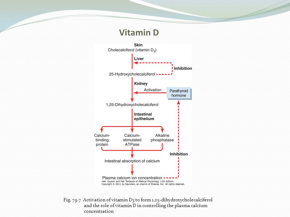 Vitamin D Fig. 79.7 Activation of vitamin D3 to form 1,25-dihydroxycholecalciferol. and the role of vitamin D in controlling the plasma calcium.