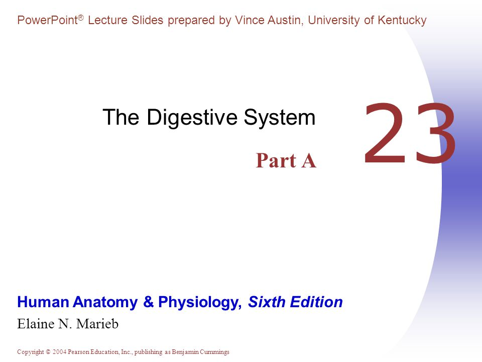 The Digestive System Part A
