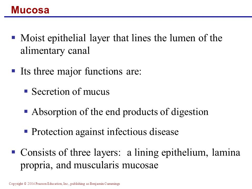 Moist epithelial layer that lines the lumen of the alimentary canal
