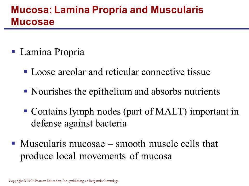 Mucosa: Lamina Propria and Muscularis Mucosae