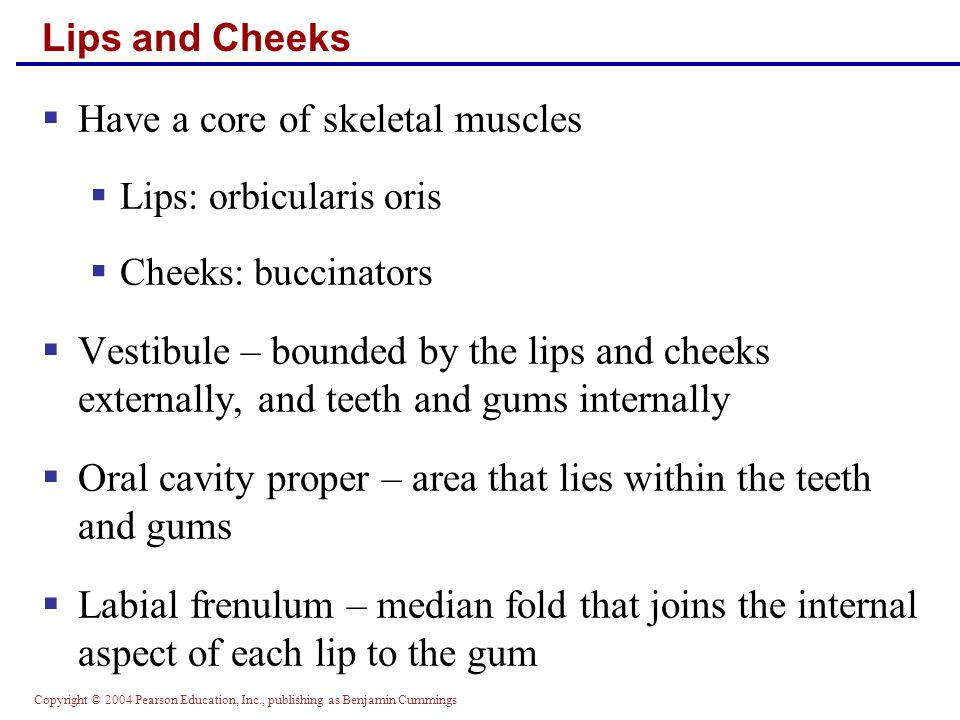 Have a core of skeletal muscles