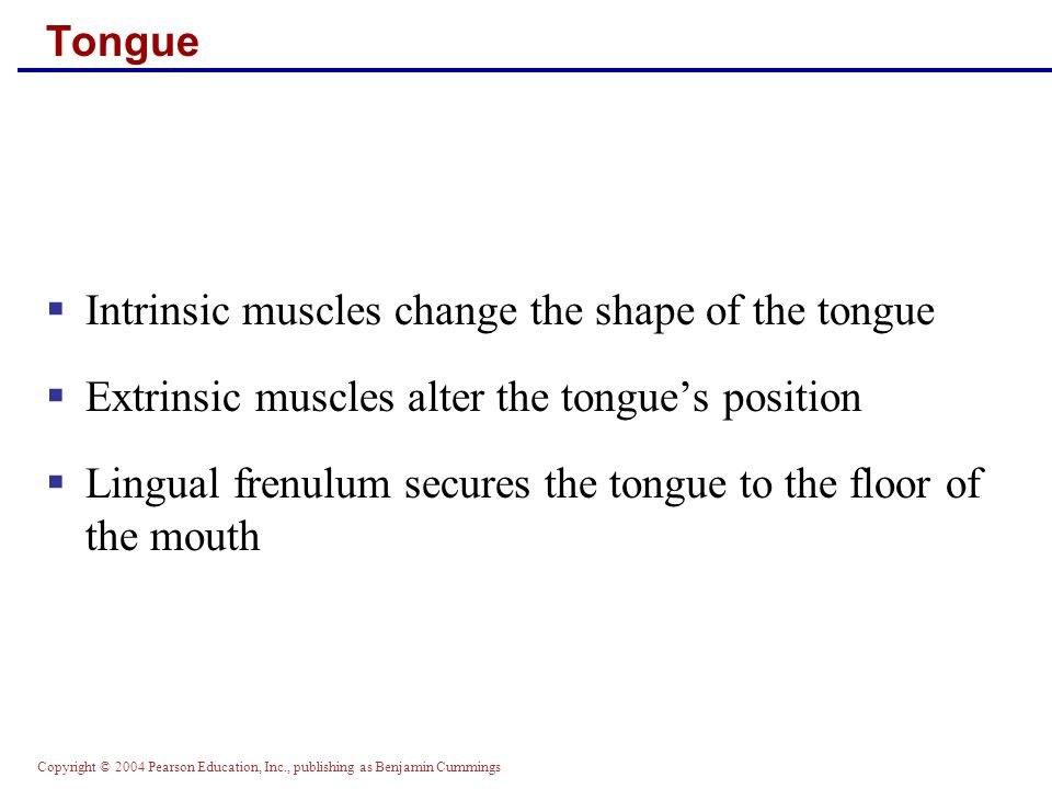 Intrinsic muscles change the shape of the tongue