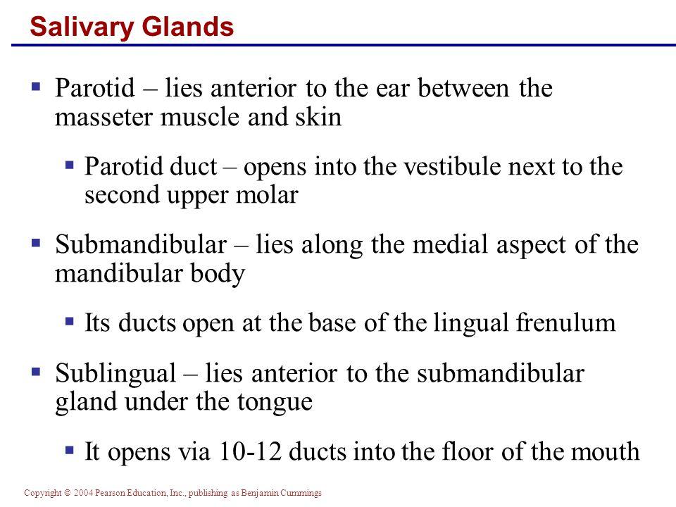 Submandibular – lies along the medial aspect of the mandibular body