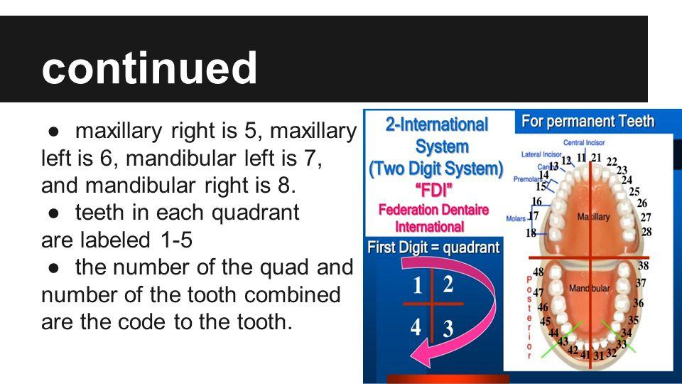 continued maxillary right is 5, maxillary
