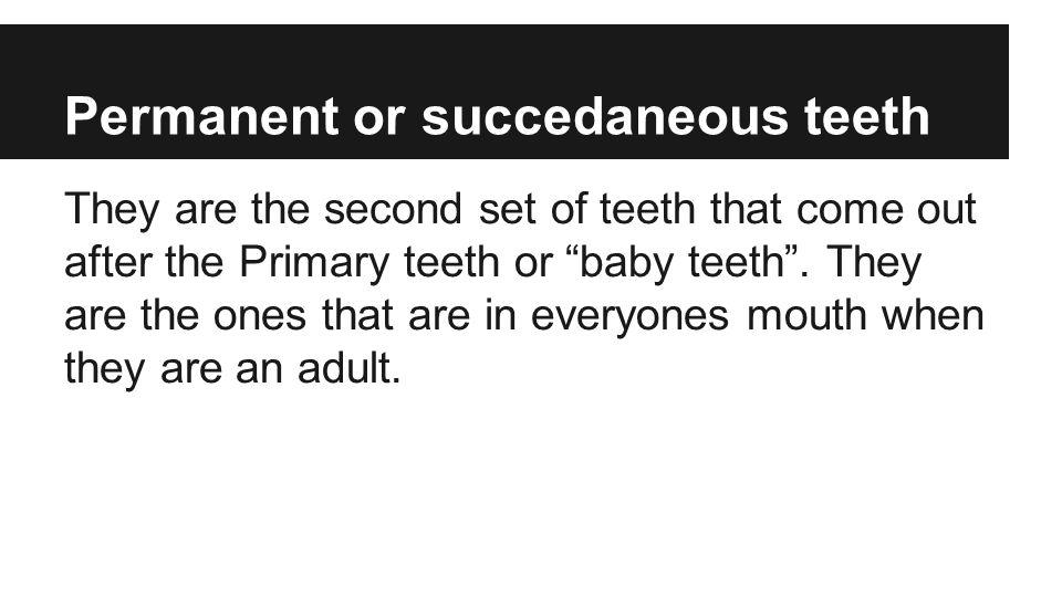 Permanent or succedaneous teeth