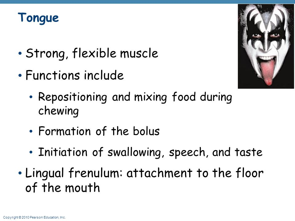 Strong, flexible muscle Functions include