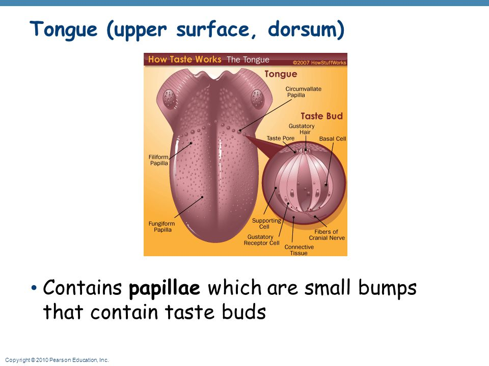 Tongue (upper surface, dorsum)