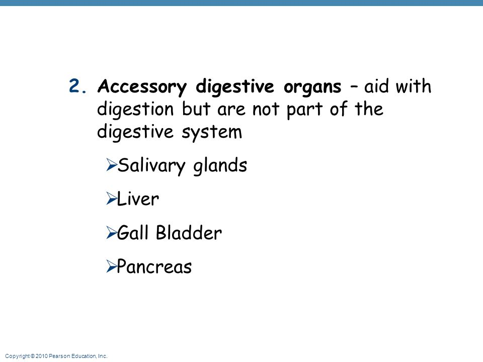 Accessory digestive organs – aid with digestion but are not part of the digestive system