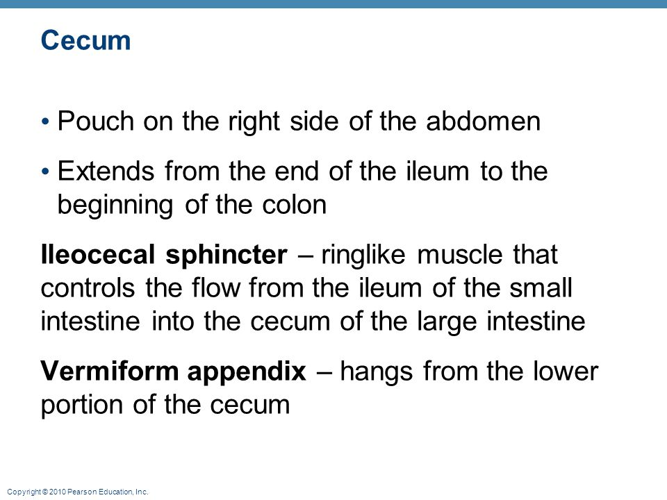 Cecum Pouch on the right side of the abdomen. Extends from the end of the ileum to the beginning of the colon.