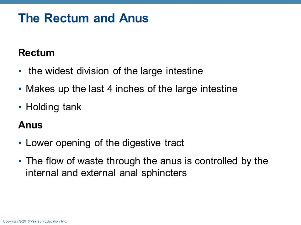 The Rectum and Anus Rectum the widest division of the large intestine
