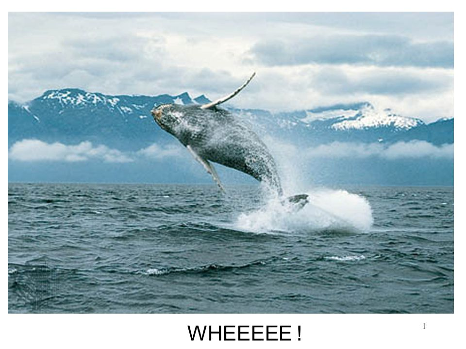WHEEEEE ! Whale Evolution: Different Lines of Evidence