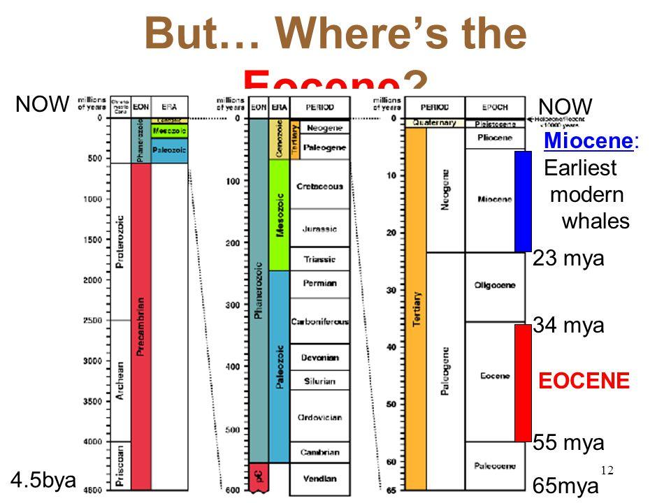 But… Where's the Eocene