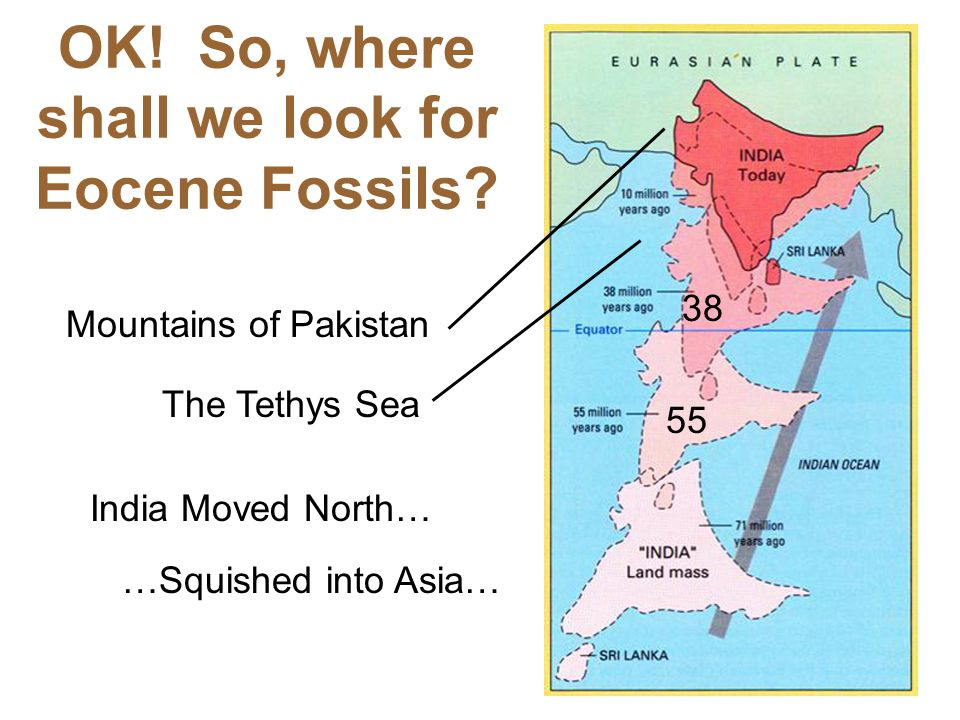 OK! So, where shall we look for Eocene Fossils