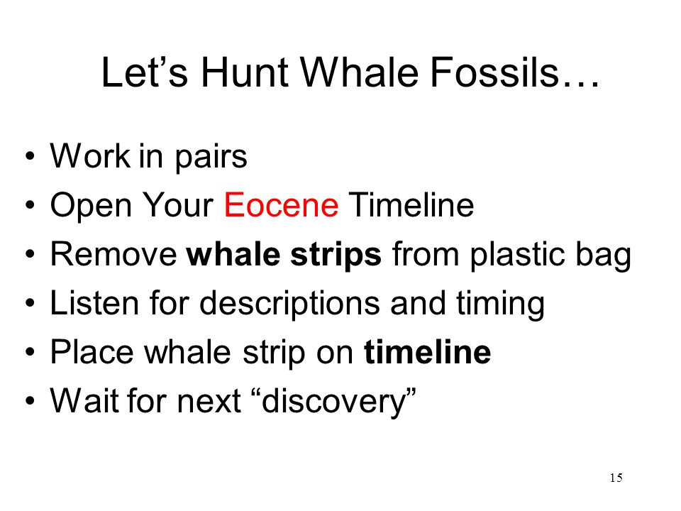 Let's Hunt Whale Fossils…