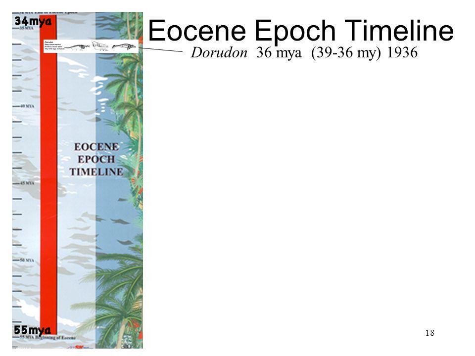 Eocene Epoch Timeline Dorudon 36 mya (39-36 my) 1936