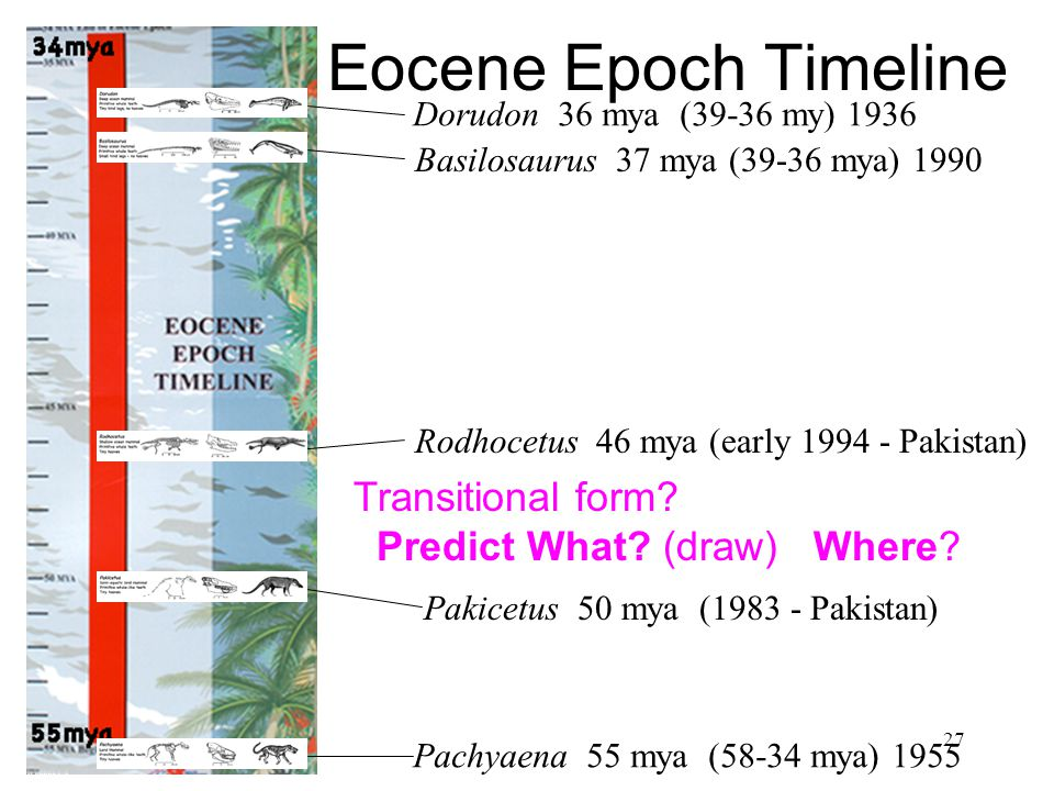 Eocene Epoch Timeline Transitional form Predict What (draw) Where