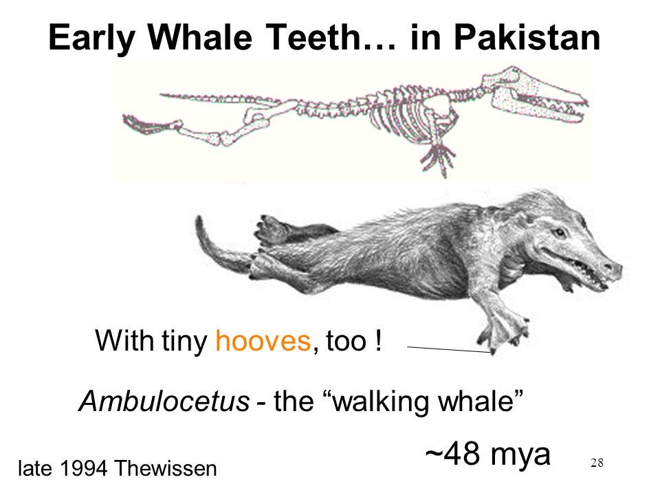 Early Whale Teeth… in Pakistan