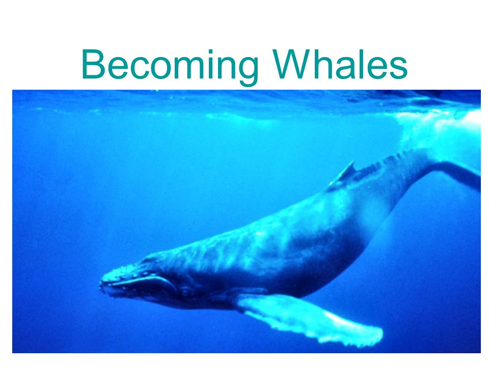 Becoming Whales