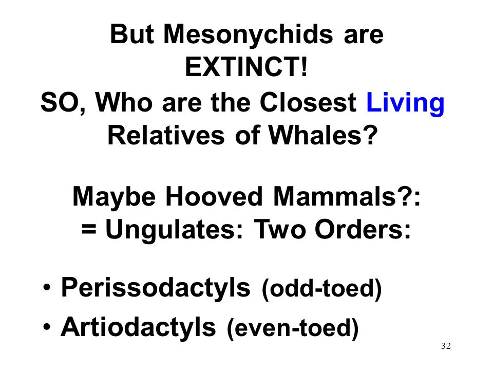 But Mesonychids are EXTINCT!