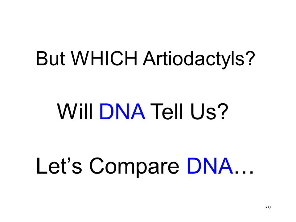 But WHICH Artiodactyls