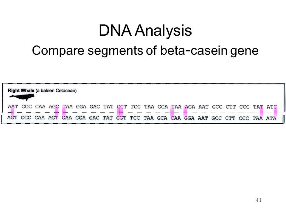 DNA Analysis Compare segments of beta-casein gene
