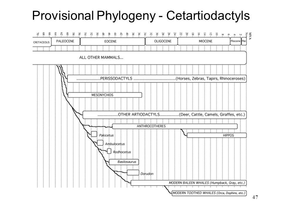 Provisional Phylogeny - Cetartiodactyls