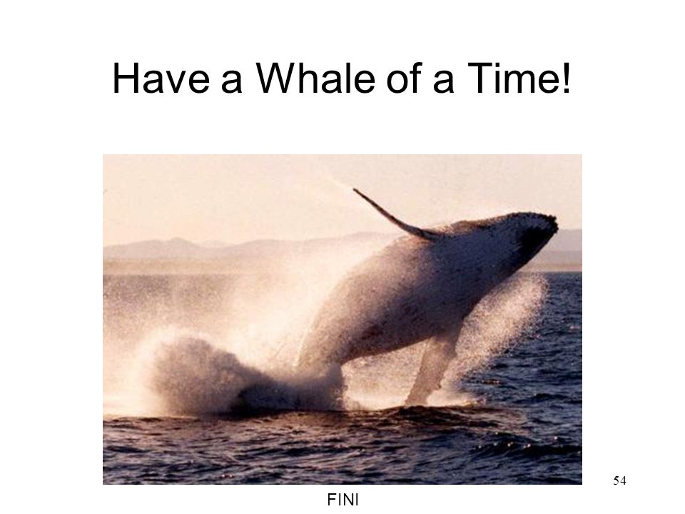 Have a Whale of a Time! FINI