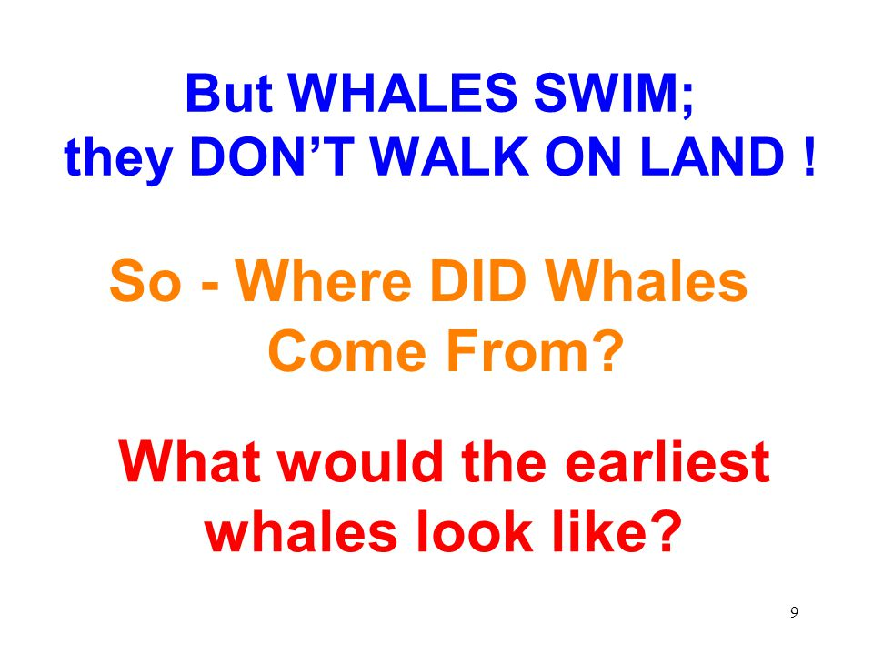 But WHALES SWIM; they DON'T WALK ON LAND !