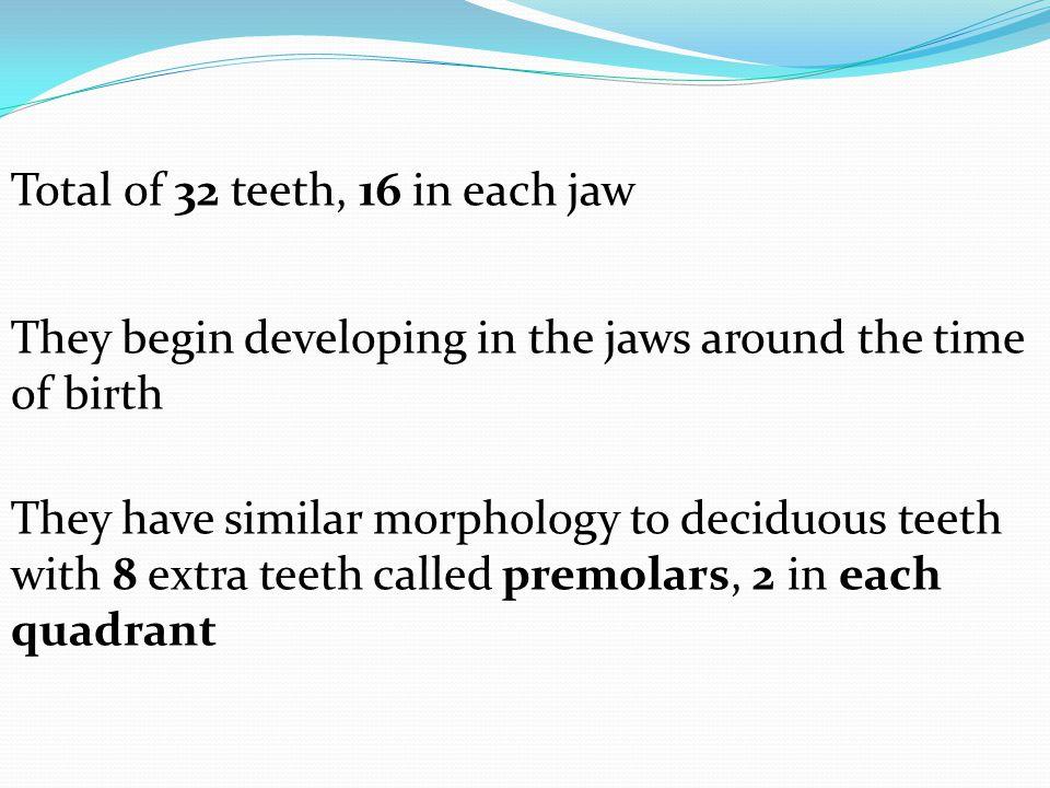 Total of 32 teeth, 16 in each jaw