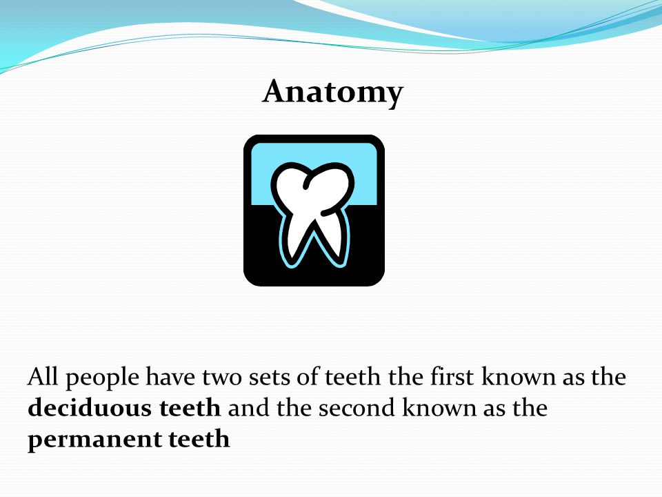 Anatomy All people have two sets of teeth the first known as the deciduous teeth and the second known as the permanent teeth.