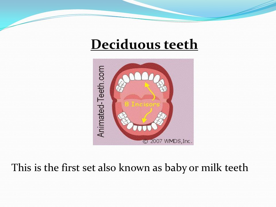 Deciduous teeth This is the first set also known as baby or milk teeth