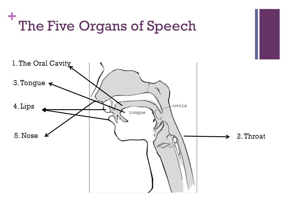 The Five Organs of Speech