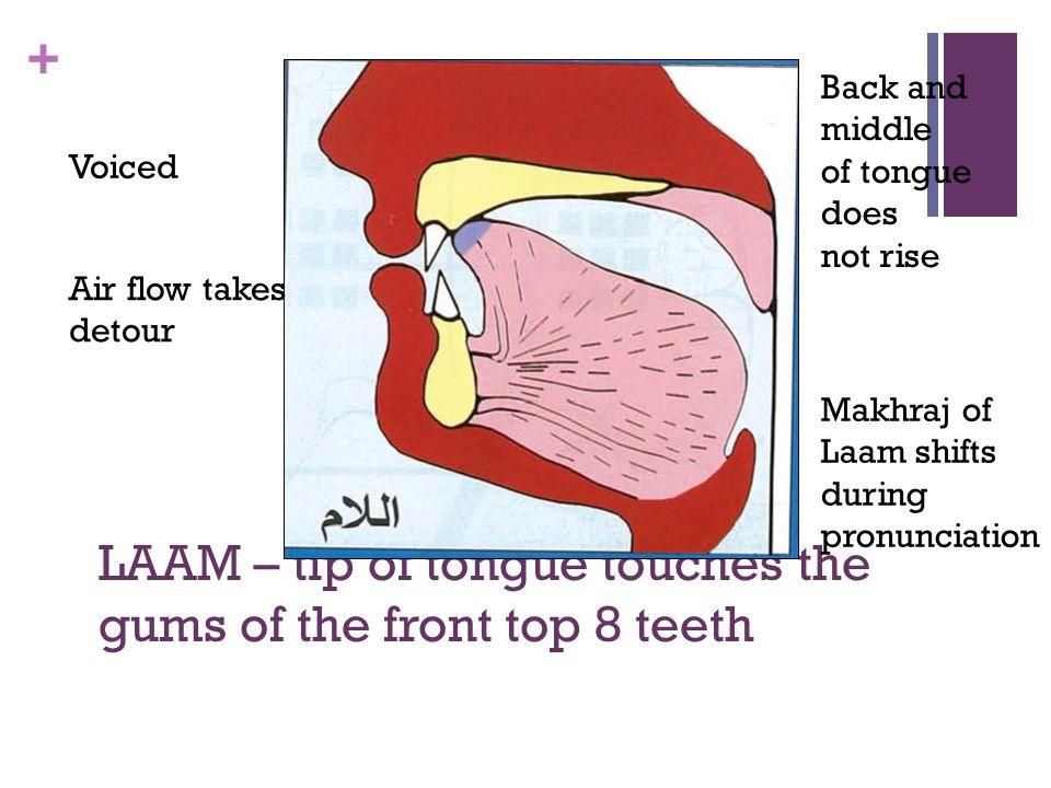 LAAM – tip of tongue touches the gums of the front top 8 teeth
