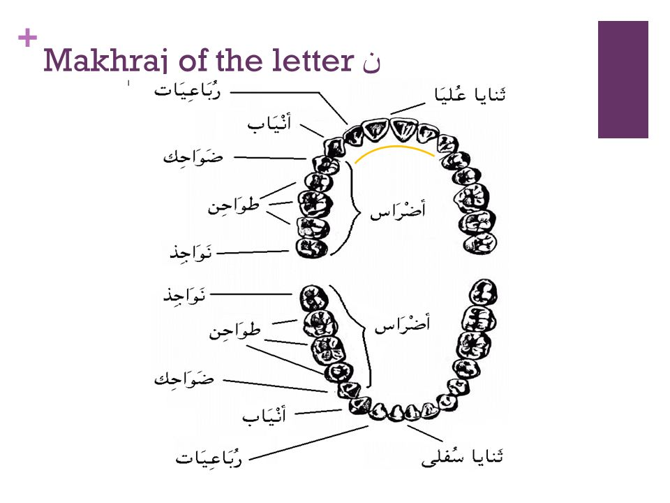 Makhraj of the letter ن