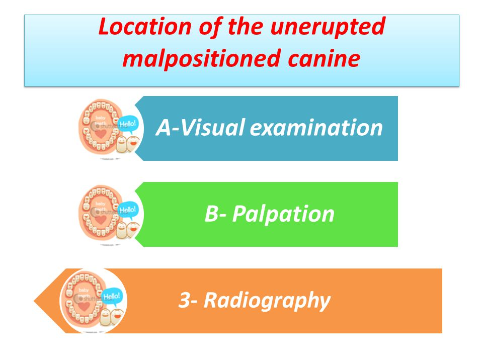 Location of the unerupted malpositioned canine
