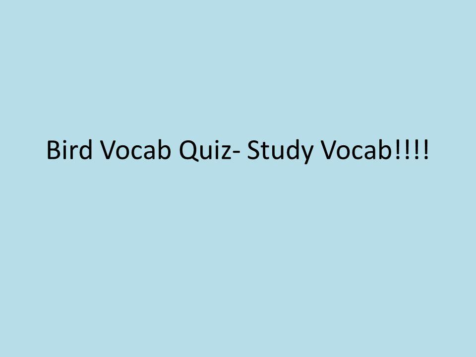 Bird Vocab Quiz- Study Vocab!!!!