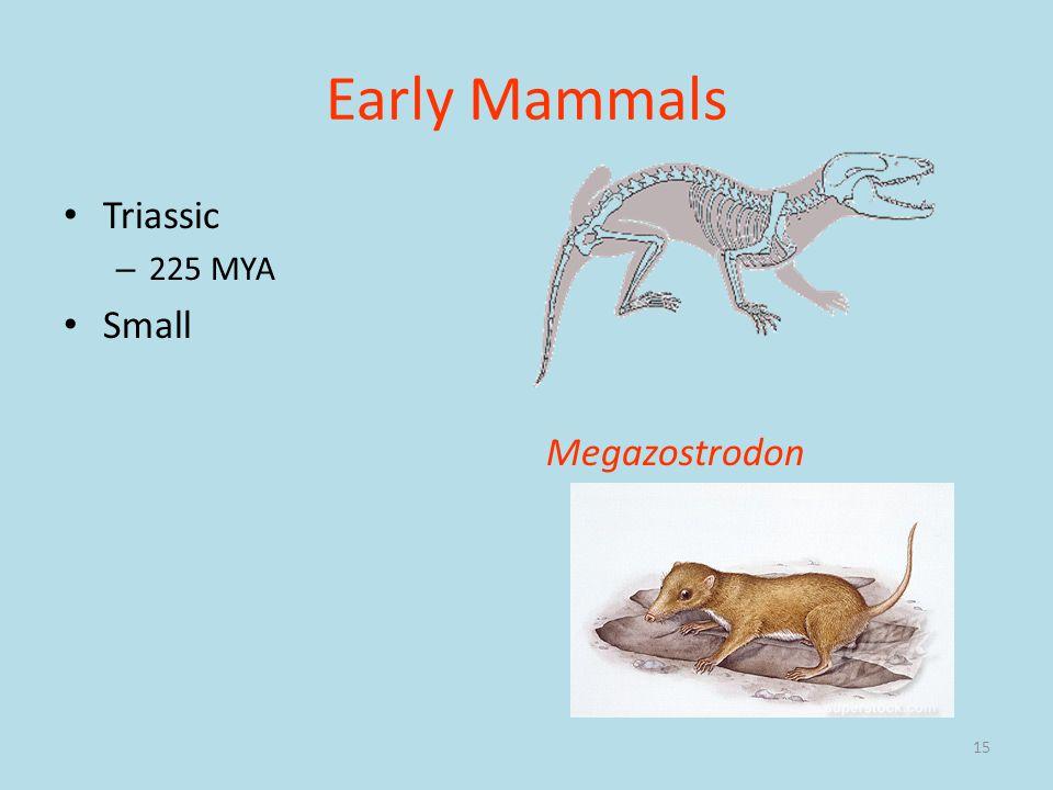 Early Mammals Triassic 225 MYA Small Megazostrodon