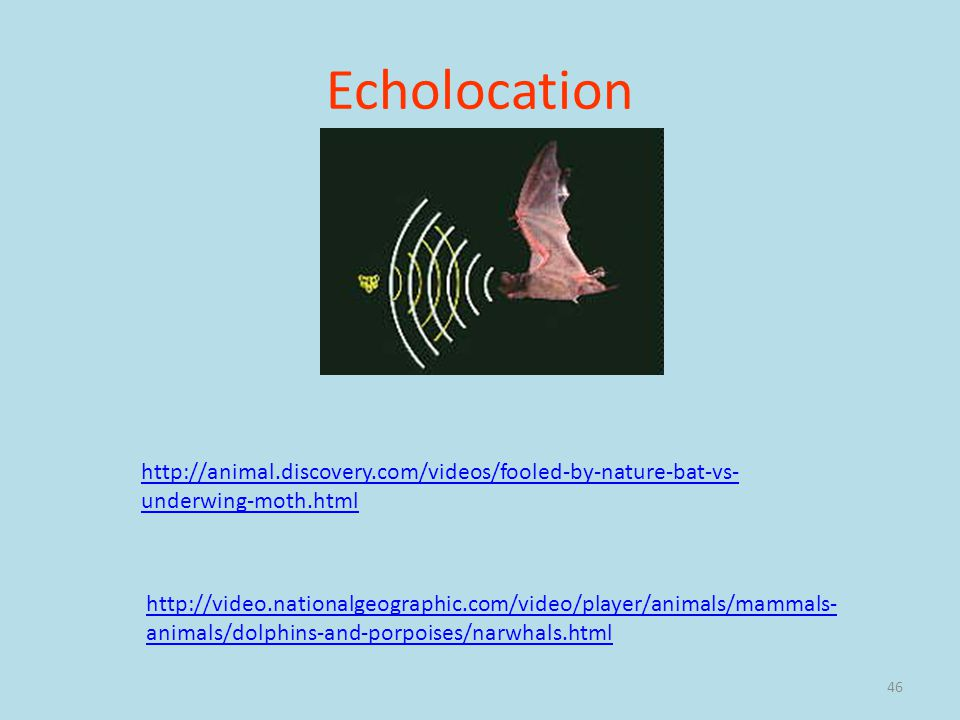 Echolocation http://animal.discovery.com/videos/fooled-by-nature-bat-vs-underwing-moth.html.