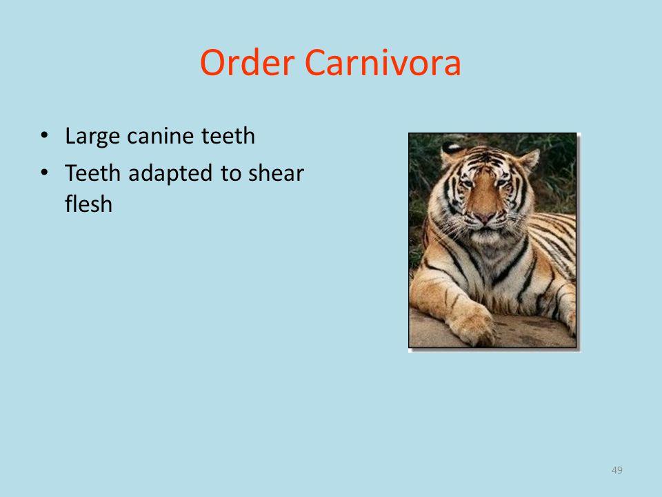Order Carnivora Large canine teeth Teeth adapted to shear flesh