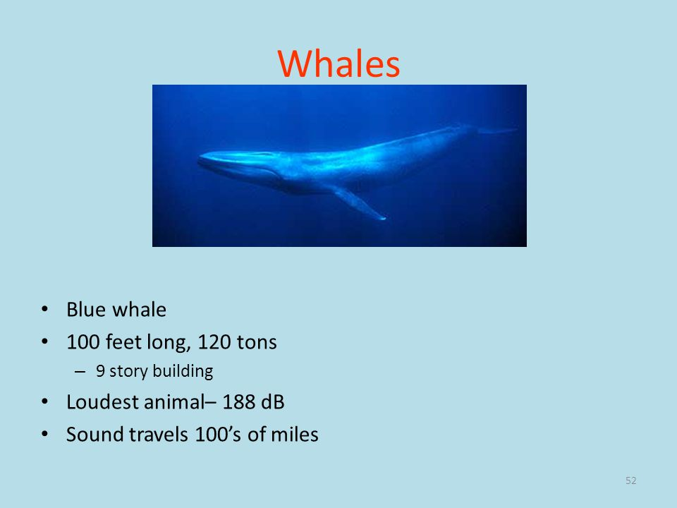 Whales Blue whale 100 feet long, 120 tons Loudest animal– 188 dB