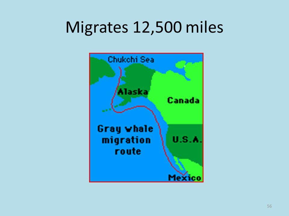 Migrates 12,500 miles