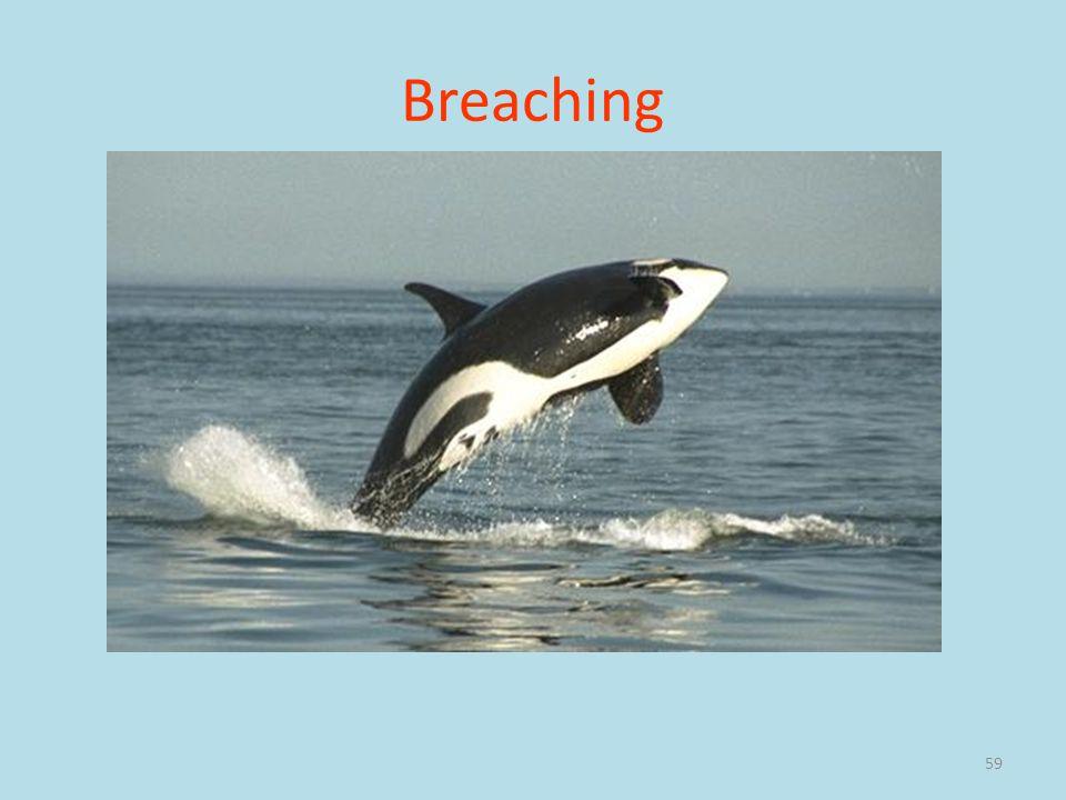 Breaching