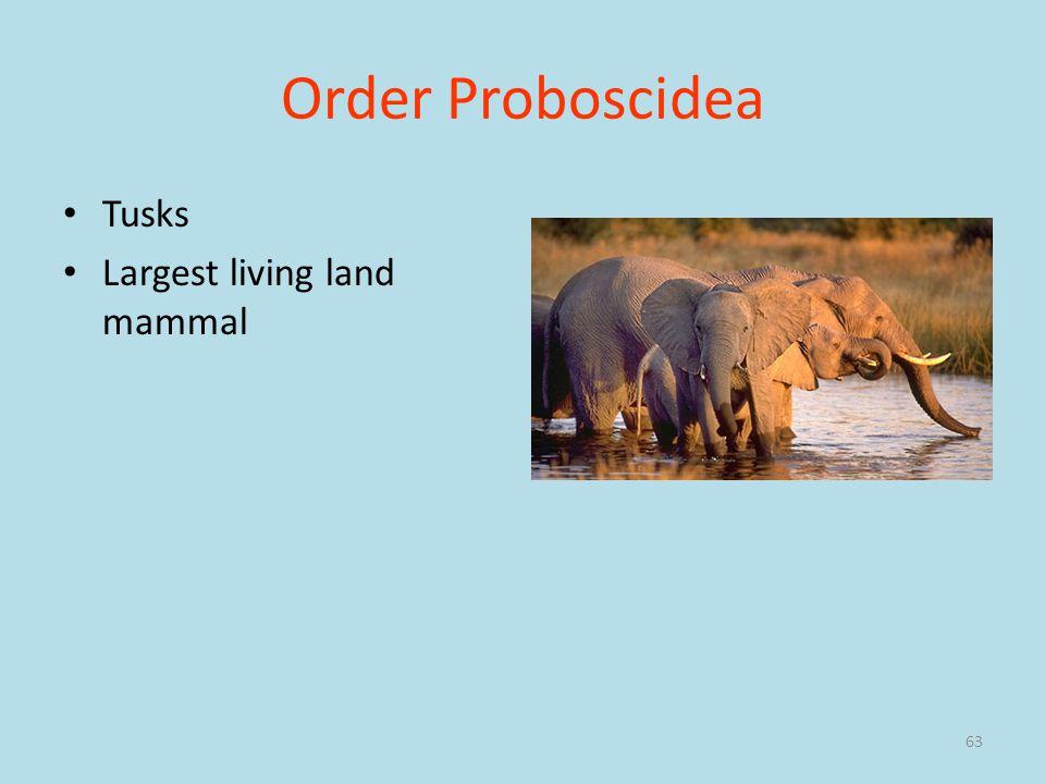 Order Proboscidea Tusks Largest living land mammal