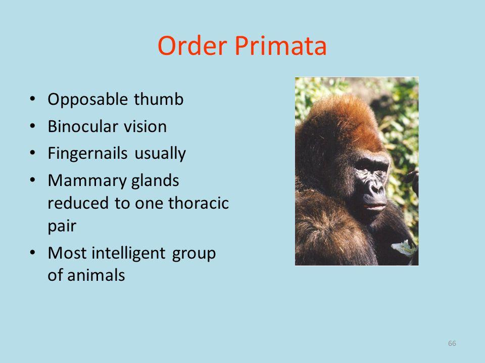 Order Primata Opposable thumb Binocular vision Fingernails usually