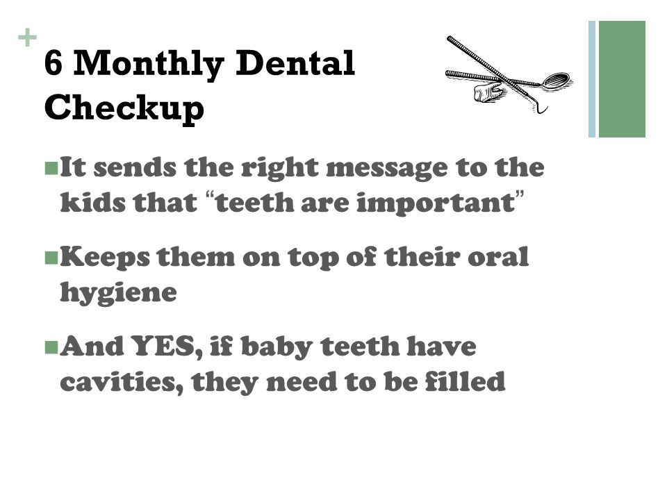 6 Monthly Dental Checkup