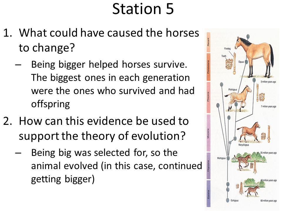 Station 5 What could have caused the horses to change