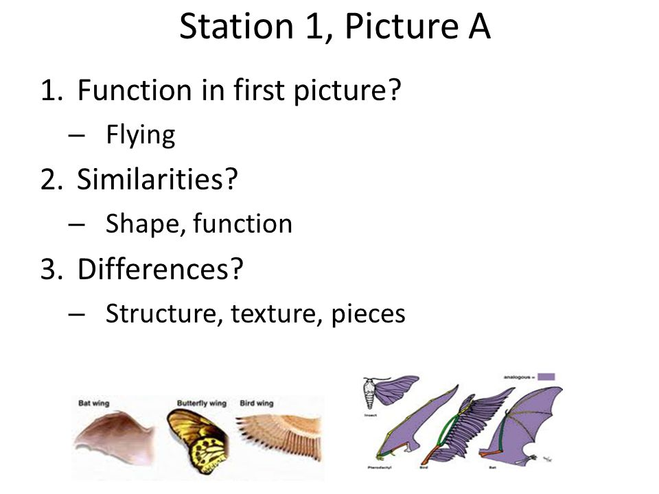 Station 1, Picture A Function in first picture Similarities